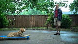Annie - Golden Doodle | Redeeming Dogs | Tod Mcvicker Dallas Dog Training