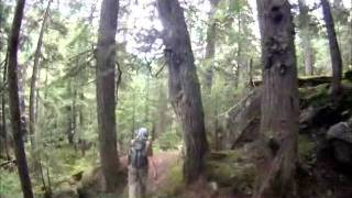 Grizzly Bear Encounter