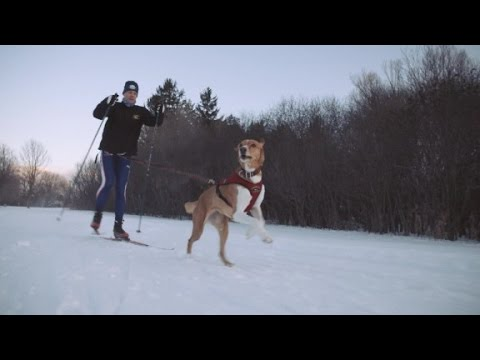 Skiing + Man's Best Friend = Skijoring
