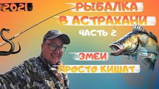 Рыбалка в Астрахани на реке Ахтуба Рыбалка мечты Рыбалка 2021 Ловля судака на спиннинг Часть 2