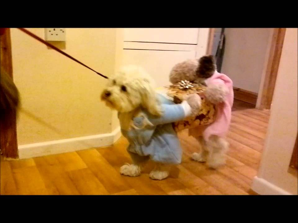 Best Ever fancy dress costume for a Dog - YouTube