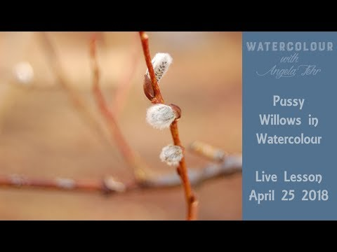Watercolour with Angela Fehr: Pussy Willows