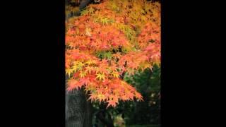 五木ひろしさんの「裏通り」を歌ってみました。