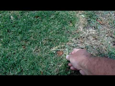 Xeriscaping Lawn Removal Will Not End Weed Problems
