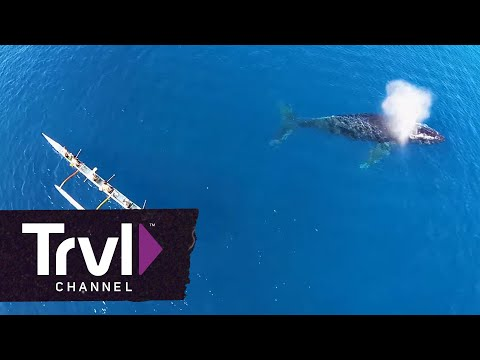 Extreme Whale Watching in Maui - Travel Channel