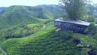 Cameron Highlands by Drone | Aerial Videos Malaysia