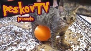 Смешные кошки #6. Кот и воздушный шарик, прикол!)
