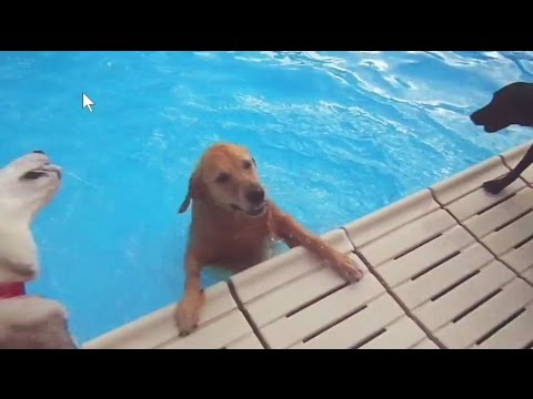Swimming Gone to the Dogs at Terrace Park Family Aquatic Center - Sioux Falls 2016