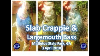 Clarks Hill Lake Fishing, Crappie and Largemouth Bass, Mistletoe Park, 3 April 2016