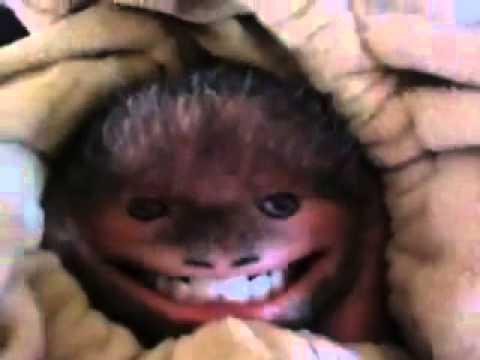 Un singe pour faire rire les enfants