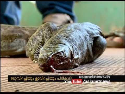 Monitor lizard and Sambar meat seized from Toddy shop Ernakulam | FIR 12 AUg 2017 thumbnail