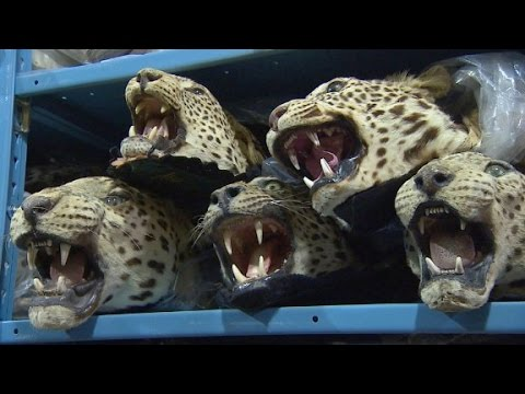 Exotic animal trade exposed YouTube