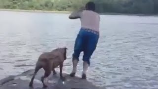Собака подумала, что хозяин тонет