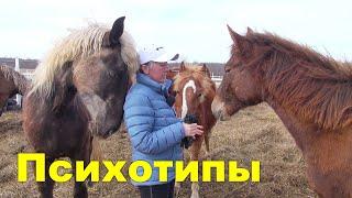 Психология молодой лошади или  почему они разные.