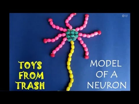 Model of a neuron hindi 9mbavi youtube ccuart Choice Image