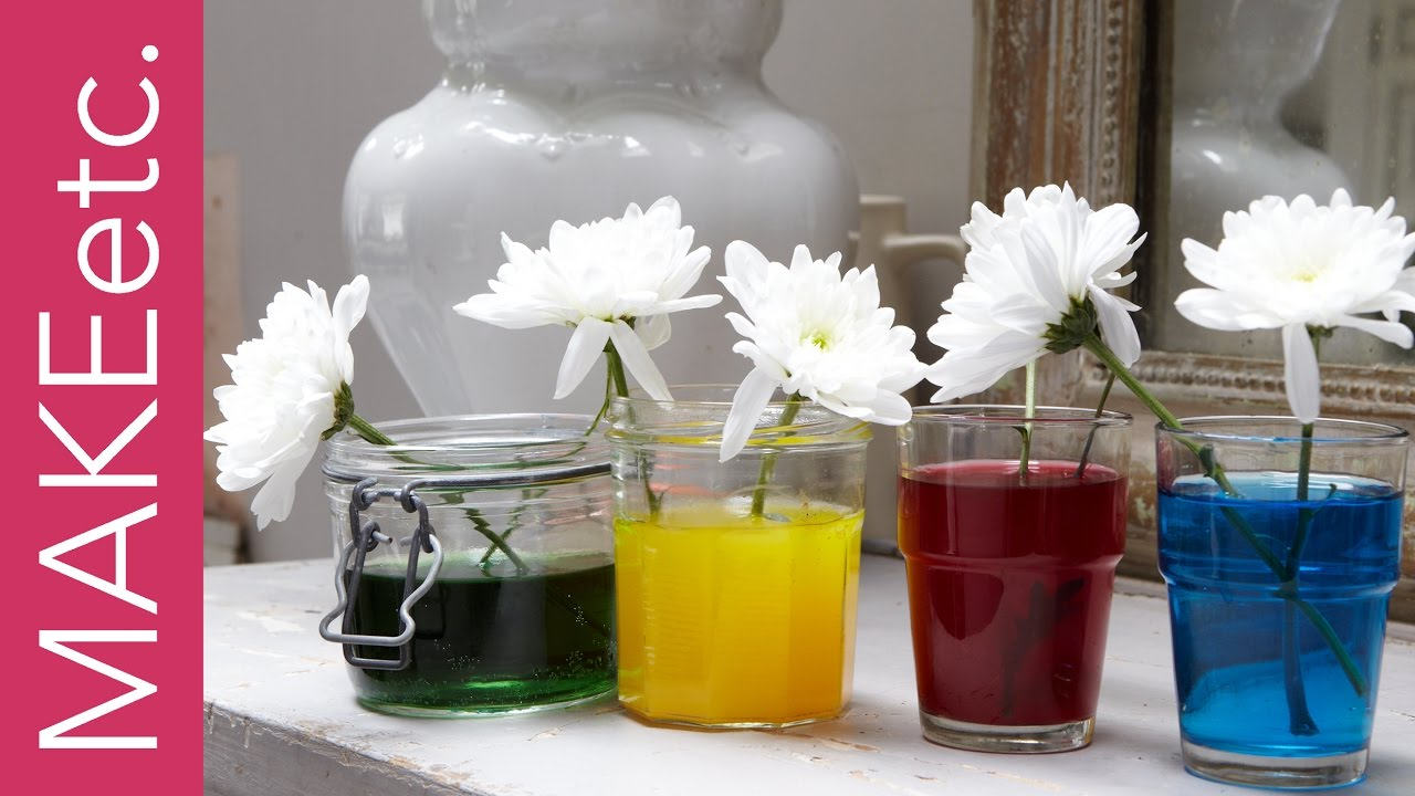 Kids\' Science Experiment - How to turn white flowers into colourful ...