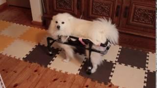 ななのために作っている手作り4輪車椅子 どうしても逆走してしまうので ...