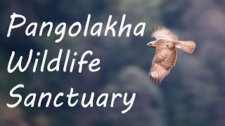 Pangolakha Wildlife Sanctuary   Sikkim   Birds of the Silk Route - A Documentary