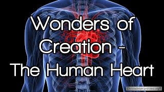 Wonders of Creation: The Human Heart