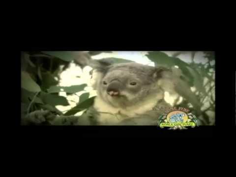 Lone Pine Koala Sanctuary Brisbane Australia