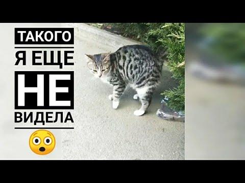 Вопрос: Хорошо ли это, если хозяйка следит за судьбой котенка Почему?