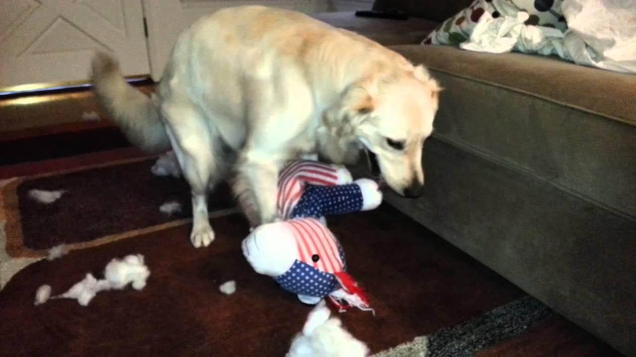 English Cream Golden Retriever Puppy Destroyed Pony Stuffed Animal