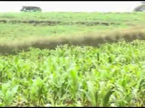 Vetiver System - Land Pays... (an example of best practices in Ethiopia)