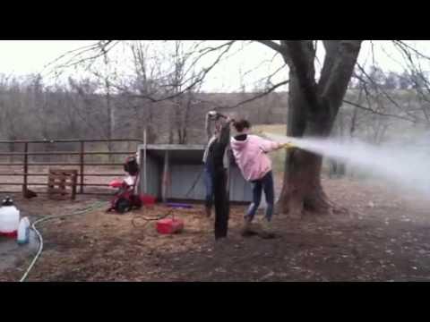 power washing chicken house