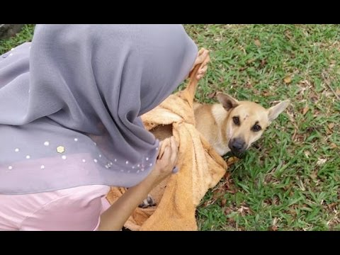 Malay woman praised for saving dog