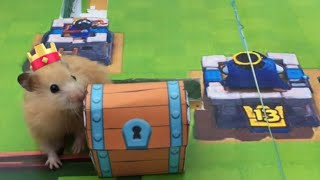 CLASH ROYALE Hamster Obstacle Course