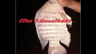 Pesca de Tilápia = O melhor Sistema de Montagem = Muito Produtivo .