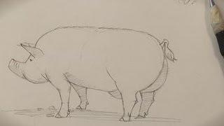 How To Draw A Piggy
