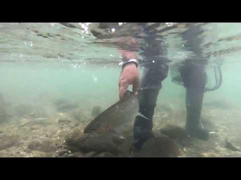 New Zealand Fly Fishing Trip 2018 - North Island - Lake Taupo Region Inc Backcountry.