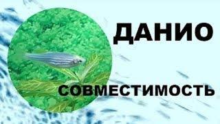 Данио. Совместимость аквариумных рыбок.