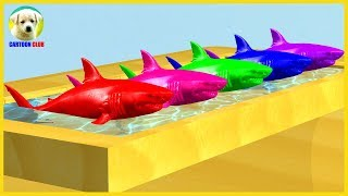 Learn Colors with #Shark swimming in water Colors Cartoon for Children