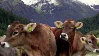 ▲ Alto Adige - Anterselva-Passo stalle ▲ 16:9 -HD- (Foto)