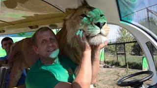 """Кто хотел видеть льва ФИЛЮ ? Фото-сессия """"ПО  БОГАТОМУ """"!!!"""