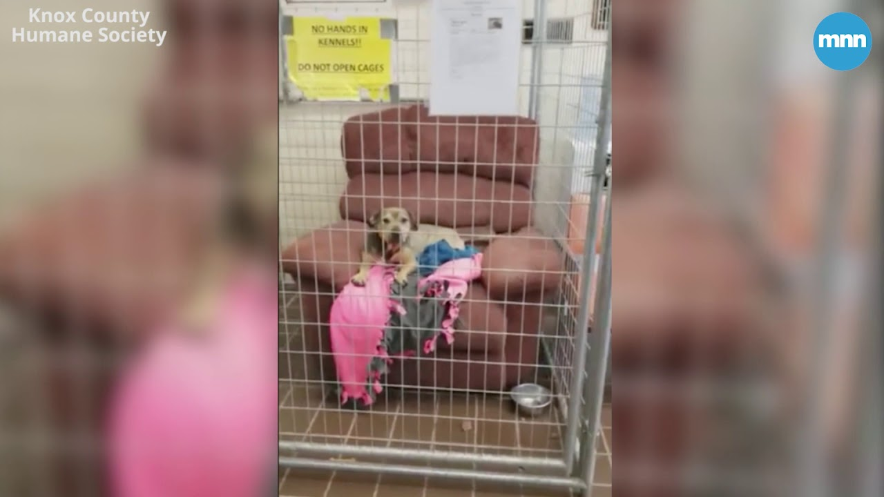 Chairs Donated For Dogs At A Shelter