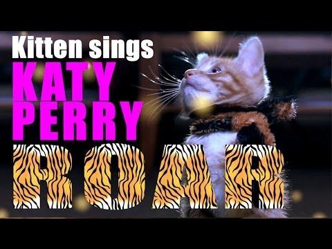 Katy Perry - Roar Parody - Kitty Purry - Meow