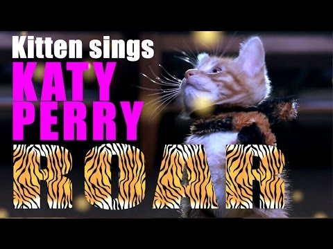 Katy Perry - Roar Parody - Kitty Purry - Meow