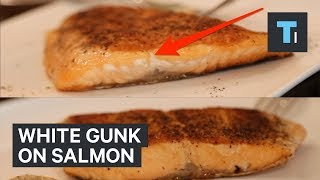 What that white gunk on your salmon actually is — and how to prevent it