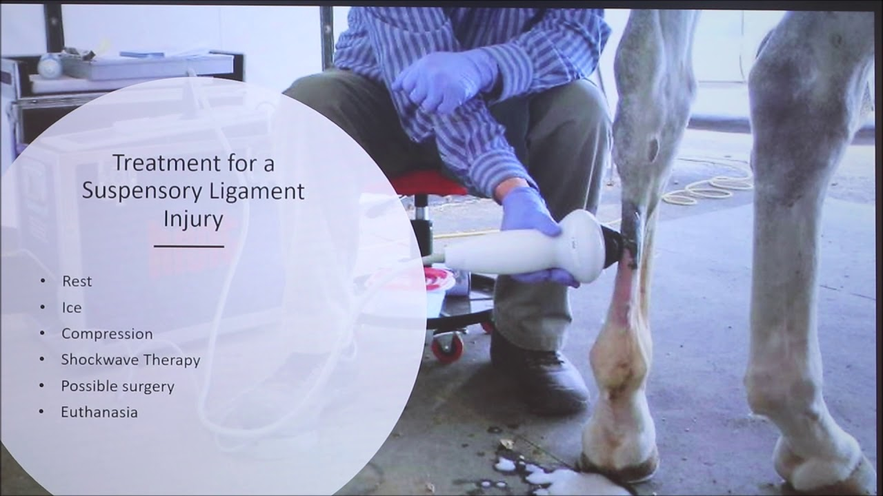 Suspensory Ligament Injuries In Horses Youtube