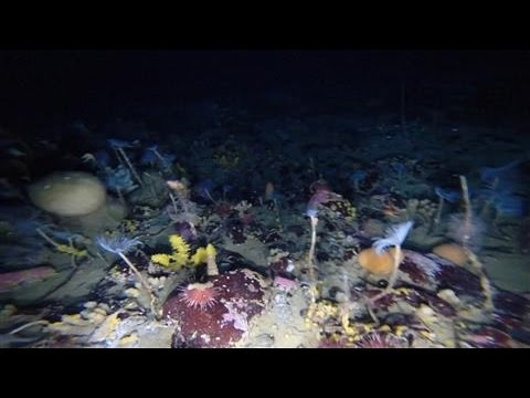 Colorful World Revealed Under Antarctica's Sea Ice