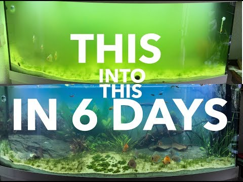 HOW TO SOLVE ALGAE PROBLEM AND GREEN WATER IN 6 DAYS