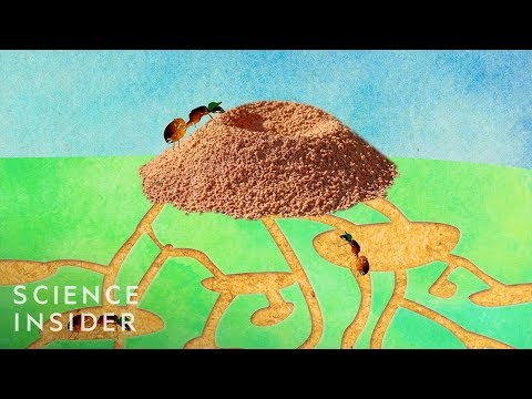 What's Inside An Anthill?