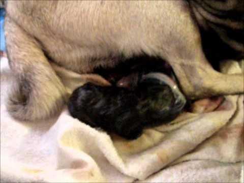 sassy gives birth warning graphic material   youtube