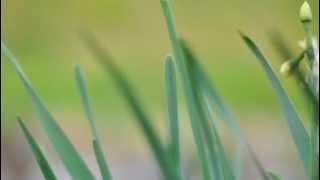 チャイコフスキーの名曲(ピアノ協奏曲・花のワルツ・弦楽セレナーデ・...