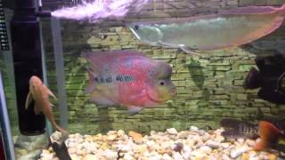 Monster Fish Aquarium - Update 10/03/12