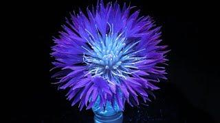 Цветы в ультрафиолете