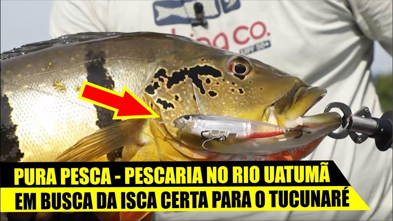 PROGRAMA PURA PESCA - RIO UATUMÃ COM RIO UM POUCO ALTO.
